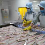 Xuất khẩu cá tra và tôm sụt giảm