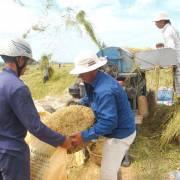 Lượng hạn ngạch gạo tháng 4 vẫn chưa xuất hết