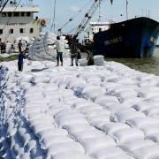 Giá gạo xuất khẩu đạt mức cao nhất trong vòng 8 năm qua