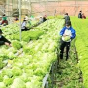 Hoạt động sản xuất, tiêu thụ nông sản ở Đà Lạt dần hồi phục
