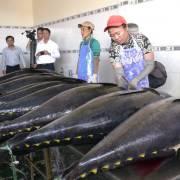 VASEP hối Bộ Công Thương sớm phân bổ hạn ngạch xuất cá ngừ sang EU