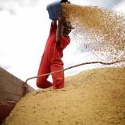 Trung Quốc ngưng mua một số mặt hàng nông sản Mỹ