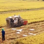 ĐBSCL: Gia tăng diện tích lúa hay giữ 'túi chứa nước'