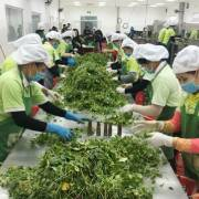 Xuất khẩu nông sản chế biến tăng vọt