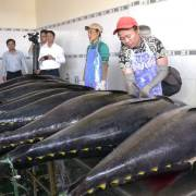 Cá ngừ, tôm hùm, bào ngư… hưởng thuế về 0% ngay khi EVFTA có hiệu lực