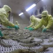 Mỹ, Trung Quốc tăng mua tôm Việt Nam