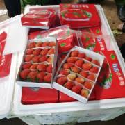10 tấn dâu tây Trung Quốc có dư lượng thuốc trừ sâu gấp 3 lần cho phép
