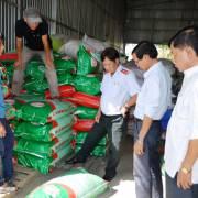 Phát hiện hơn 4 tấn lúa giống nhái thương hiệu ST24