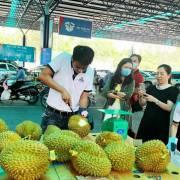 Sầu riêng Thái Lan, Malaysia giá cao vẫn cháy hàng