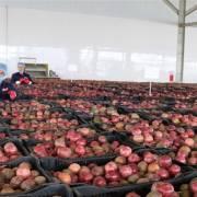 Rộng cửa vào EU, nông sản càng phải đề cao tiêu chuẩn