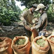 Thanh long, chanh leo, cà phê lên đường vào châu Âu với thuế suất 0%