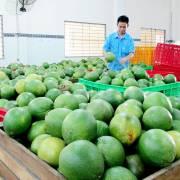 Bưởi là trái cây tiếp theo sẽ được xuất khẩu sang Mỹ
