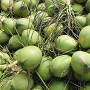 Trái cây rớt giá, xuất khẩu sụt giảm