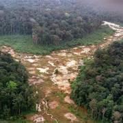 Thế giới bị mất 100 triệu hécta rừng trong 2 thập kỷ vừa qua