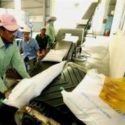 Doanh nghiệp tăng chất lượng gạo để vào thị trường EU