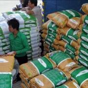 Gạo thơm Campuchia sẽ có giá cạnh tranh với gạo Việt Nam và Thái Lan