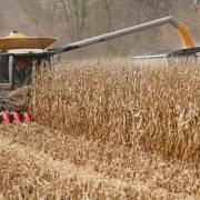 Mỹ nói Trung Quốc đang mua nông sản đúng chỉ tiêu thỏa thuận