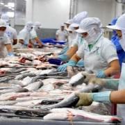 Doanh nghiệp xuất khẩu cá tra sang Trung Quốc 'cần bình tĩnh, không hạ giá bán'