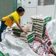 Thái Lan đặt cược vào giống gạo mới để giành lại 'ngôi vua xuất khẩu'