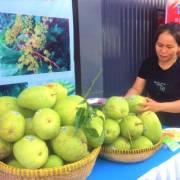 Xoài Việt Nam bán sang Mỹ đạt 2,8 triệu USD