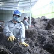 1.000 tấn thạch đen đầu tiên bán chính ngạch sang Trung Quốc