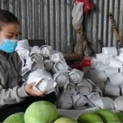Campuchia xuất khẩu lô xoài tươi đầu tiên sang thị trường Trung Quốc