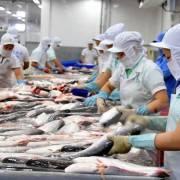 Cá da trơn 'tắc đường' xuất khẩu sang Campuchia