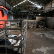 Lò mổ lớn nhất đóng cửa, Campuchia chuẩn bị cấm bán thịt chó