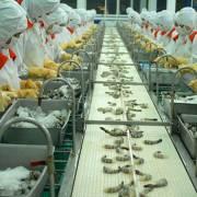 Không có bằng chứng DN Việt Nam 'trốn' thuế chống bán phá giá tôm ở Mỹ