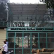 Một chủ vườn lan đột biến ở Hà Nội bị tố lừa 200 tỷ đồng