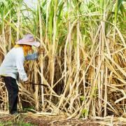 Áp thuế chống bán phá giá đường nhập từ Thái Lan