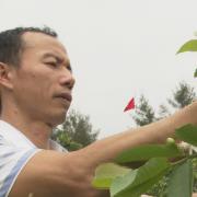 Vợ chồng công chức xin nghỉ việc về quê trồng rau sạch