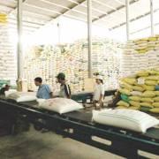 Nhập khẩu gạo giá rẻ tái xuất, ảnh hưởng đến uy tín gạo Việt Nam