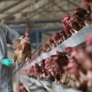 Trung Quốc công bố ca nhiễm cúm H10N3 đầu tiên trên người
