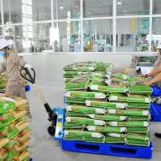 Gạo Ấn Độ 'khoác áo' gạo Việt, lo khách tháo chạy