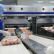 Vừa làm vừa canh Covid-19, nhiều nơi sản xuất sụt giảm tới 50%