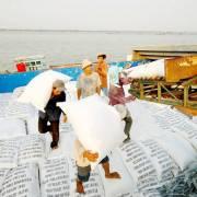 5 triệu tấn lúa miền Tây ngóng thương lái