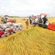 Ngân hàng Nhà nước đưa ra 7 giải pháp hỗ trợ lúa gạo miền Tây