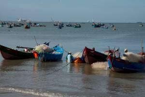 [Photo] Mùa lưới cá mai