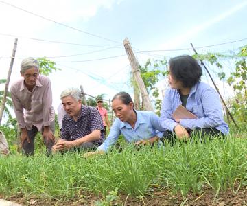 Làm nông hữu cơ PGS bắt đầu sinh lợi