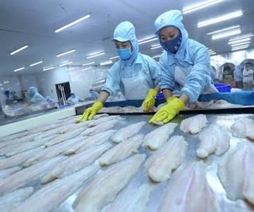 Cơ hội mở rộng thị trường xuất khẩu cá da trơn tại Mỹ