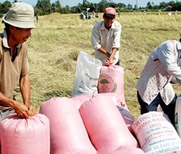 Giá lúa tăng mạnh, nông dân Tiền Giang phấn khởi