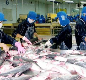 Cá tra vào Mỹ vẫn khó trăm bề
