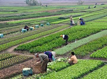 Không dễ chuyển sang nông nghiệp hữu cơ
