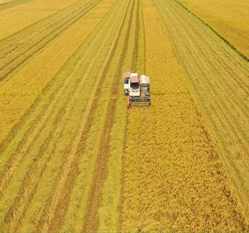 Đề xuất thúc đẩy nguồn cung cho thị trường giao dịch đất nông nghiệp