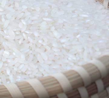 Úc thay đổi quy trình kiểm tra đối với gạo không có khả năng nảy mầm