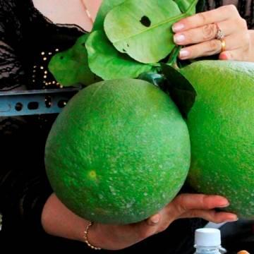 Với sản xuất trái cây, cuộc chơi bây giờ phải có kiến thức, phải làm tử tế