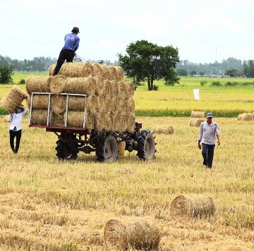 Hàng chục triệu tấn phụ phẩm nông sản đang bị lãng phí