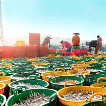 [Photo] Bình minh ở cảng cá Cà Ná