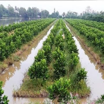 ĐBSCL: Lợi nhuận tăng thêm 10.672 tỷ đồng từ chuyển đổi cây trồng